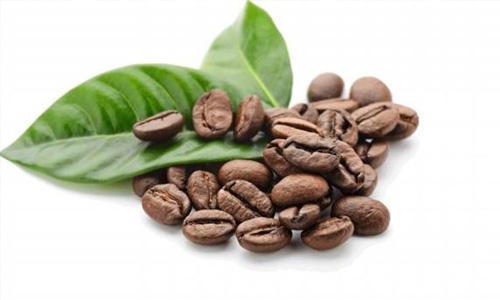 Dos compuestos del café pueden inhibir el cáncer de próstata