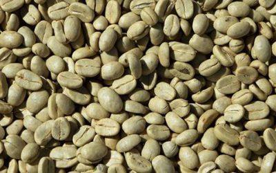 Café verde, ¿un nuevo 'superfood'?